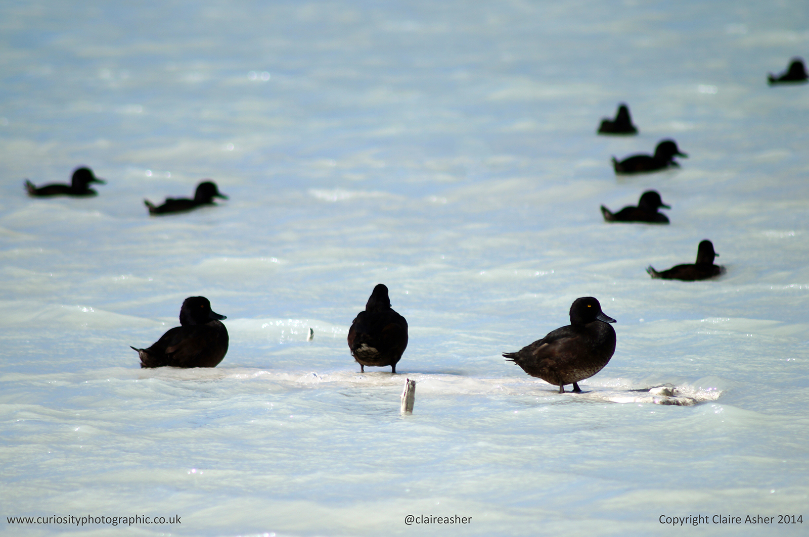 Birds photographed in Rotorua, New Zealand in 2014