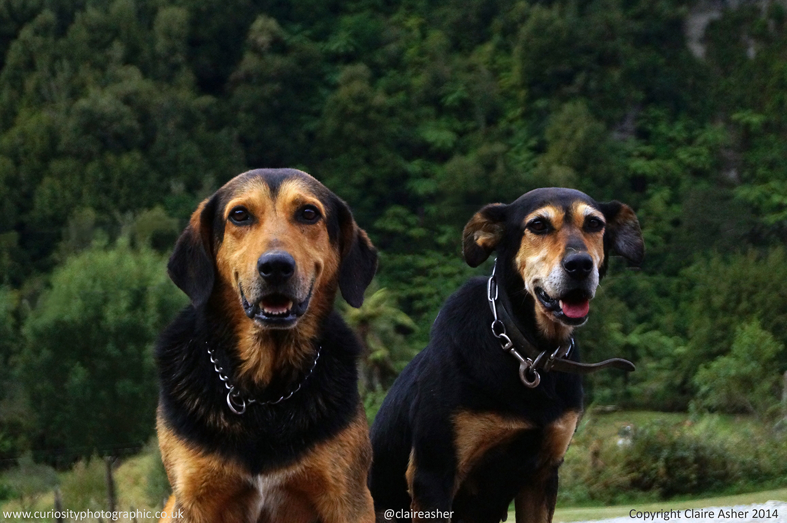 Dogs photographed in New Zealand in 2014
