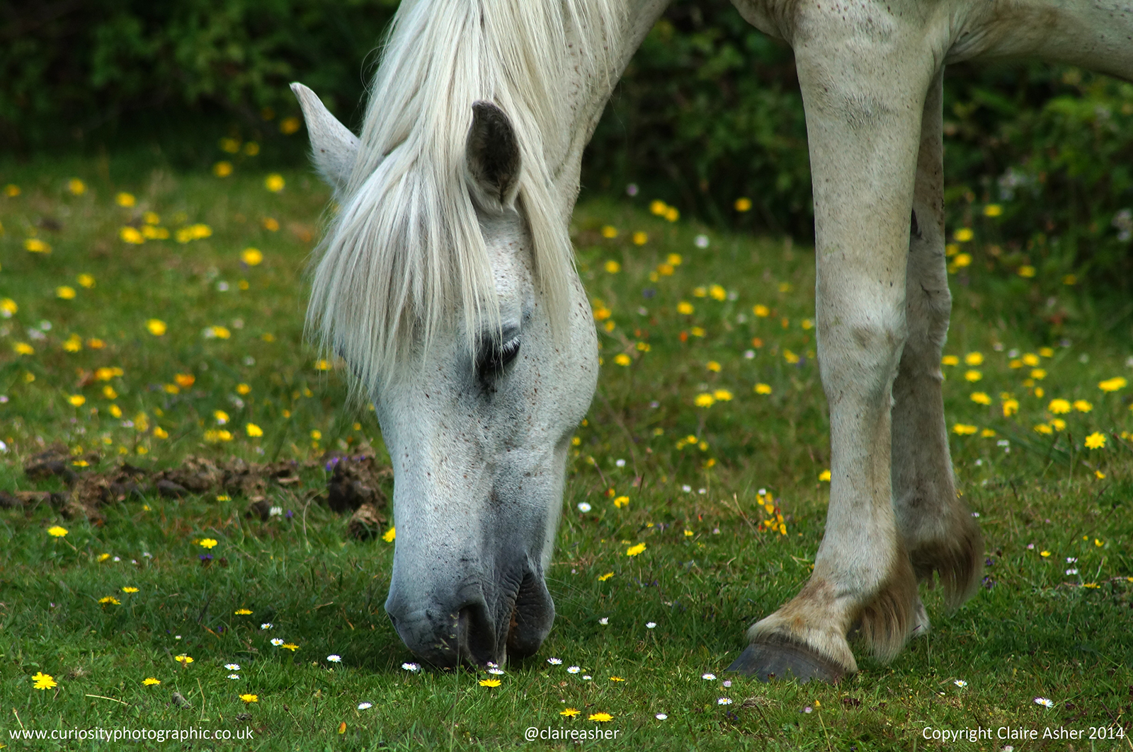 A horse photographed in the New Forest in 2014.