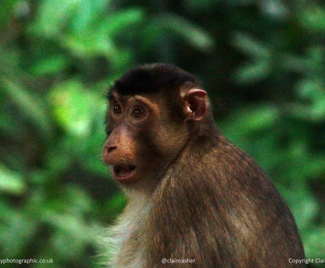 Shocked macaque