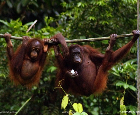 Ape Gossip