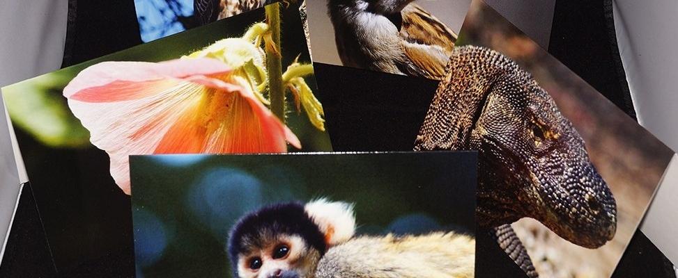 2016 Wildlife Greetings Cards