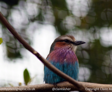 Magenta Turquoise Profile