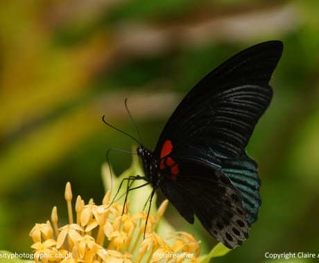 Polkadot Flutter