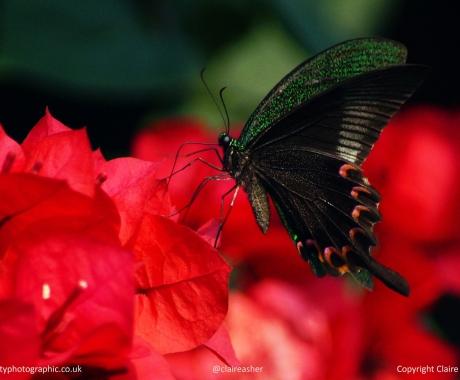 Yangshuo flutter