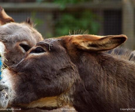 Donkey's Dinner