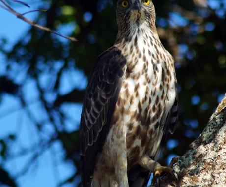 Eagle Eye-Contact
