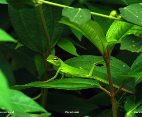Reptilian Yoga