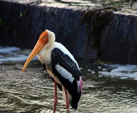 Storking prey