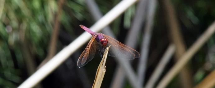 Dragonfly_01_SPA_CC