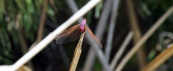 Dragonfly_02_SPA_CC