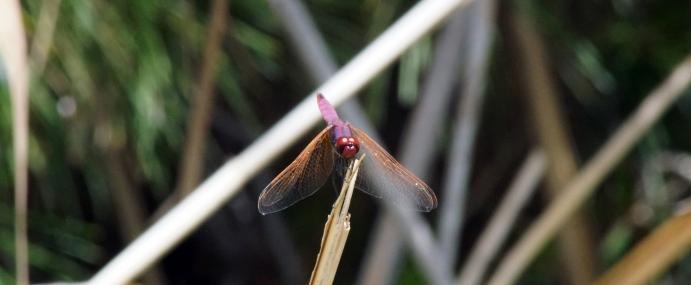 Dragonfly_03_SPA_CC