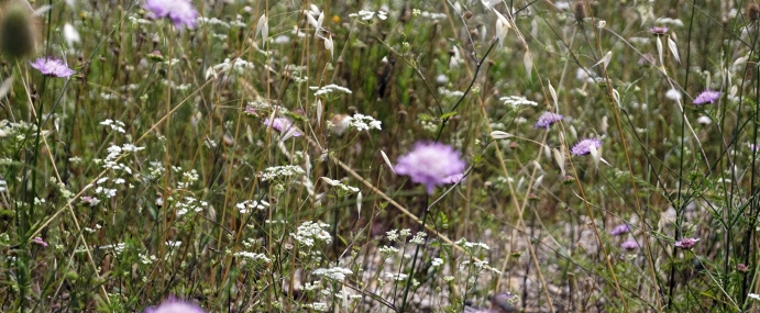 PurpleFlower_04_SPA_CC