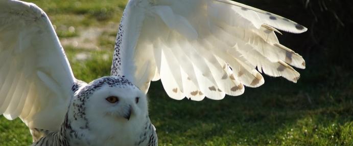 Owl_02_ENG_CC