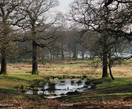 Wintery Park