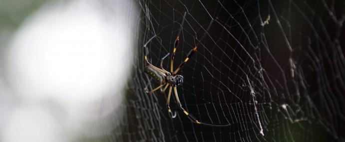 Spider_07_COS_CC